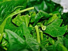 Spinat grob von den Stielen befreien und waschen
