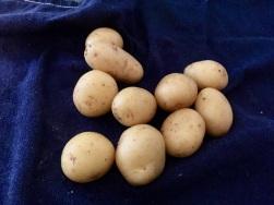 Kartoffeln gut waschen